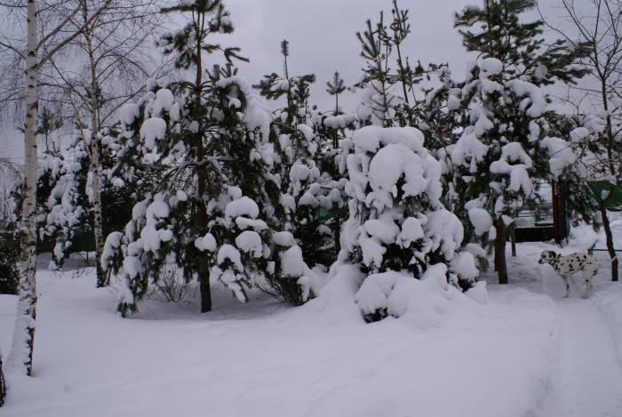 Коттеджный посёлок: г. Электроугли (фото 55)